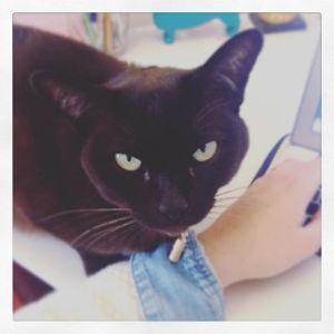 #catcompany